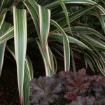 Cheerful Grasses Add Color and Movement to Your Winter Garden