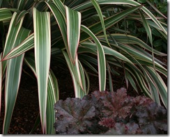 Phormium 'Tricolor' with Heuchera 'Crimson Curls'