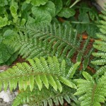 Small Plants to Enhance Your Winter Garden