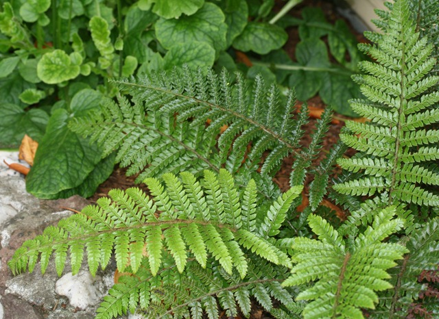 Small Plants to Enhance Your Winter Garden – Plants for Winter Garden