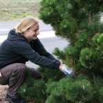In Other Words: Winter Pruning Guides from Around the Web