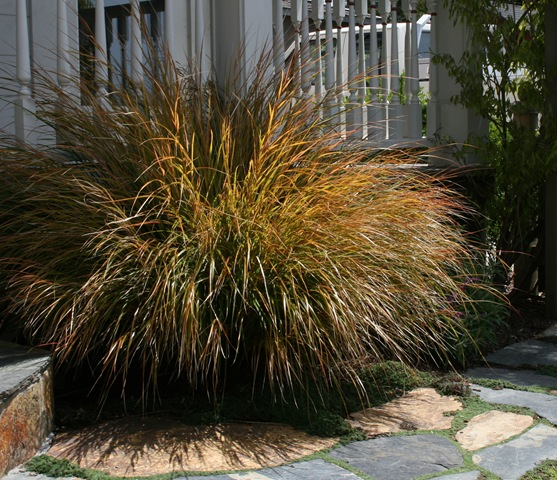 how to fix dead grass in winter