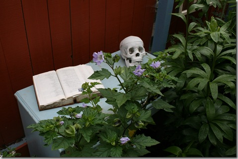 A skull sits atop a dresser, with an old, wicked book