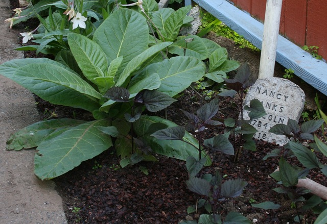 Wicked Plants Book Review Video with Amy Stewart Plus a Look – Garden Plants Toxic to Dogs
