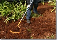 Post image for Gardening Basics: How to Apply Mulch