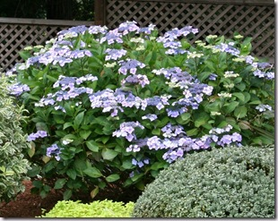 Post image for How to Prune Hydrangeas (Video Tutorial)