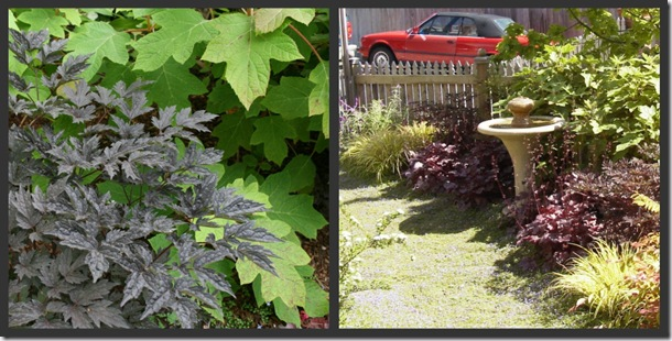 Brunette Snakeroot, Plum Pudding Heuchera, Loropetalum