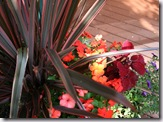 Post image for Fall Color Container Planting Idea