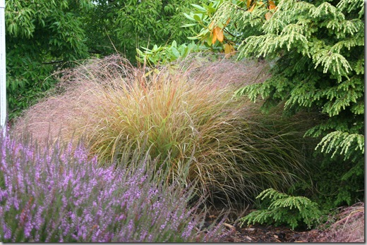 Heathers, ornamental grasses, and conifers are great fall-planting choices