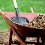 Rubber Mulch: Where the Rubber Meets the – Soil?
