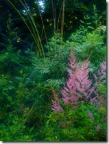 Astilbe photo by IrishFireside on Flickr Via CC Attribution License