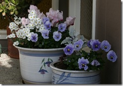 Pacific Northwest Container Gardening