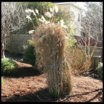 Pruning Miscanthus Grass: How to Cut Back Big Ornamental Grasses