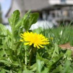 Vinegar Weed Control that Actually Works