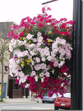 City of Alpena Hanging Baskets Photo Credit- NettasNursery