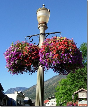 Leavenworth Bavarian Village Hanging Basket photo credit - starmist1