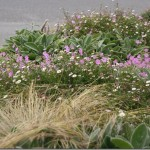 Coastal Gardening: Perennial Flowers for the Sea Coast