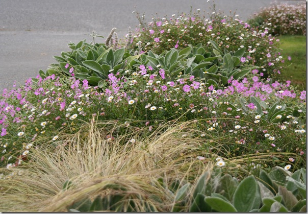 Post image for Coastal Gardening: Perennial Flowers for the Sea Coast