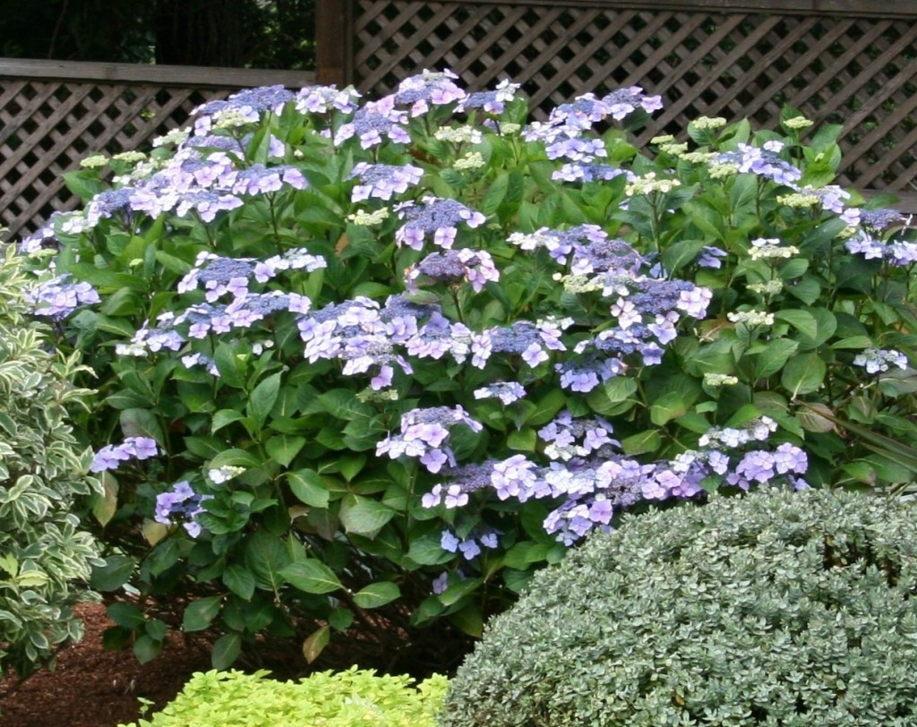 A collection of shade plants that grow well on the coast. from www.northcoastgardening.com