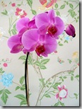 Orchid photo by geishaboy500 on Flickr