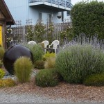 Coastal Gardening: Screens and Hedges for the Sea Coast Garden