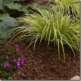 Rubber Mulch Archives Landscaping Tipslandscaping Tips