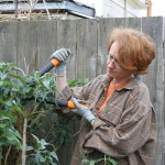 Fiskars PowerGear Lopper: Video Review In Which The Buddleja Gets It