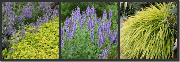 Nepeta and Golden Oregano, May Night Salvia and Rosemary, Japanese Forest Grass