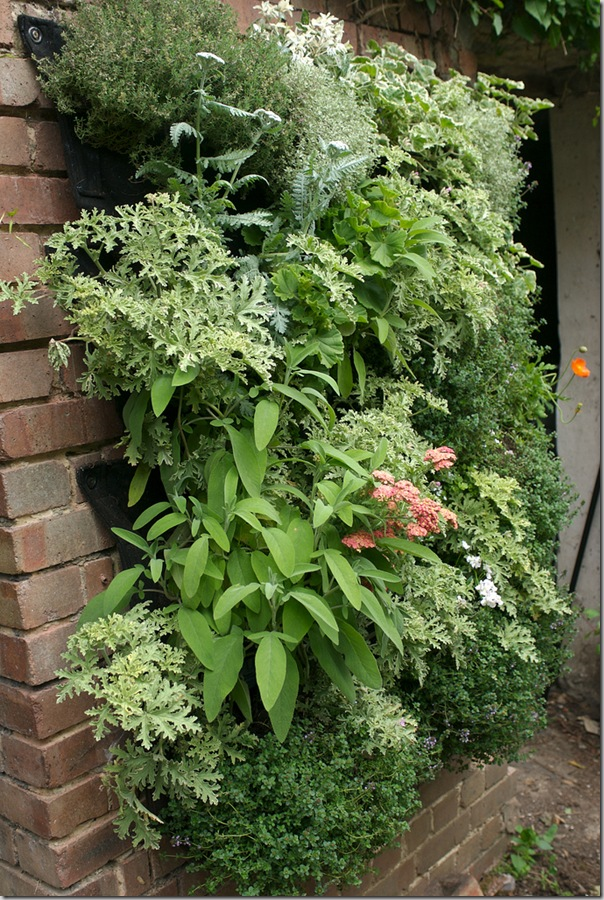 Edible living wall from Garden Up!