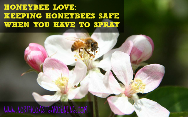 Honeybee safe spraying practices