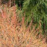 Plants for Damp or Wet Shade