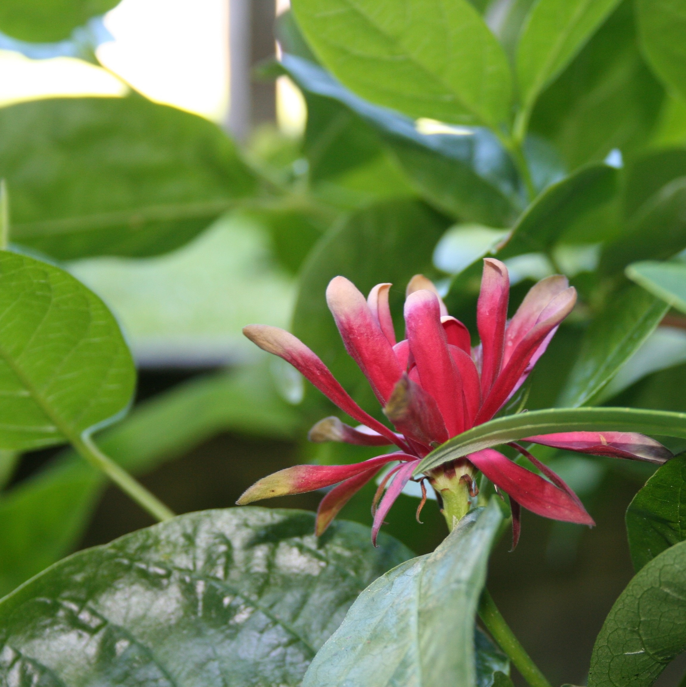Plants For Damp Or Wet Shade North Coast Gardening