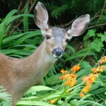 Deer on a Diet: Deer-Resistant Gardening Tips