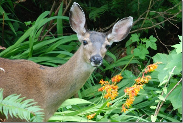 Post image for Deer on a Diet: Deer-Resistant Gardening Tips