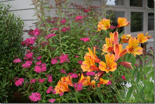 Spirea Neon Flash with Alstroemeria