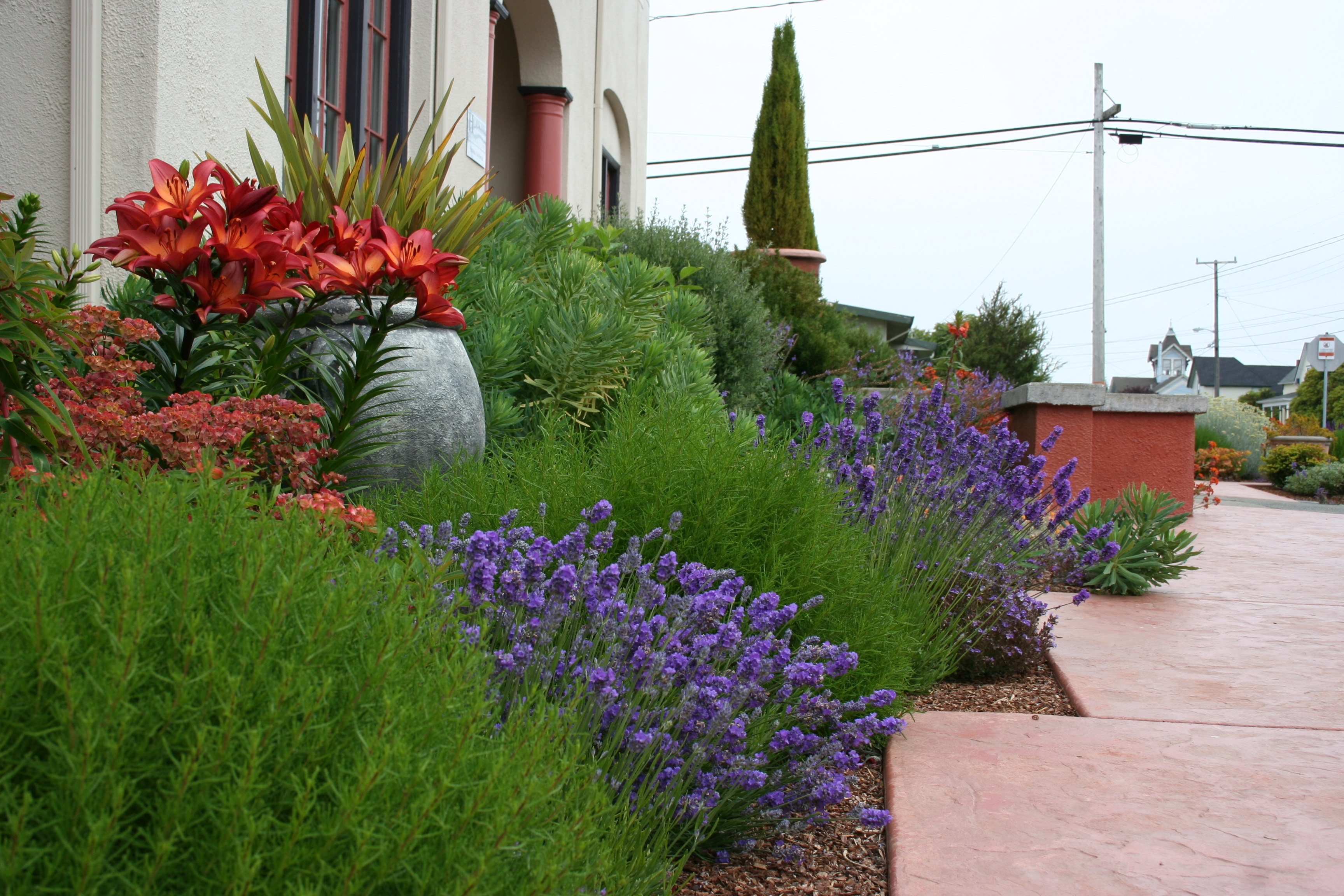 Mediterranean garden design how to create a tuscan garden for New zealand garden designs ideas