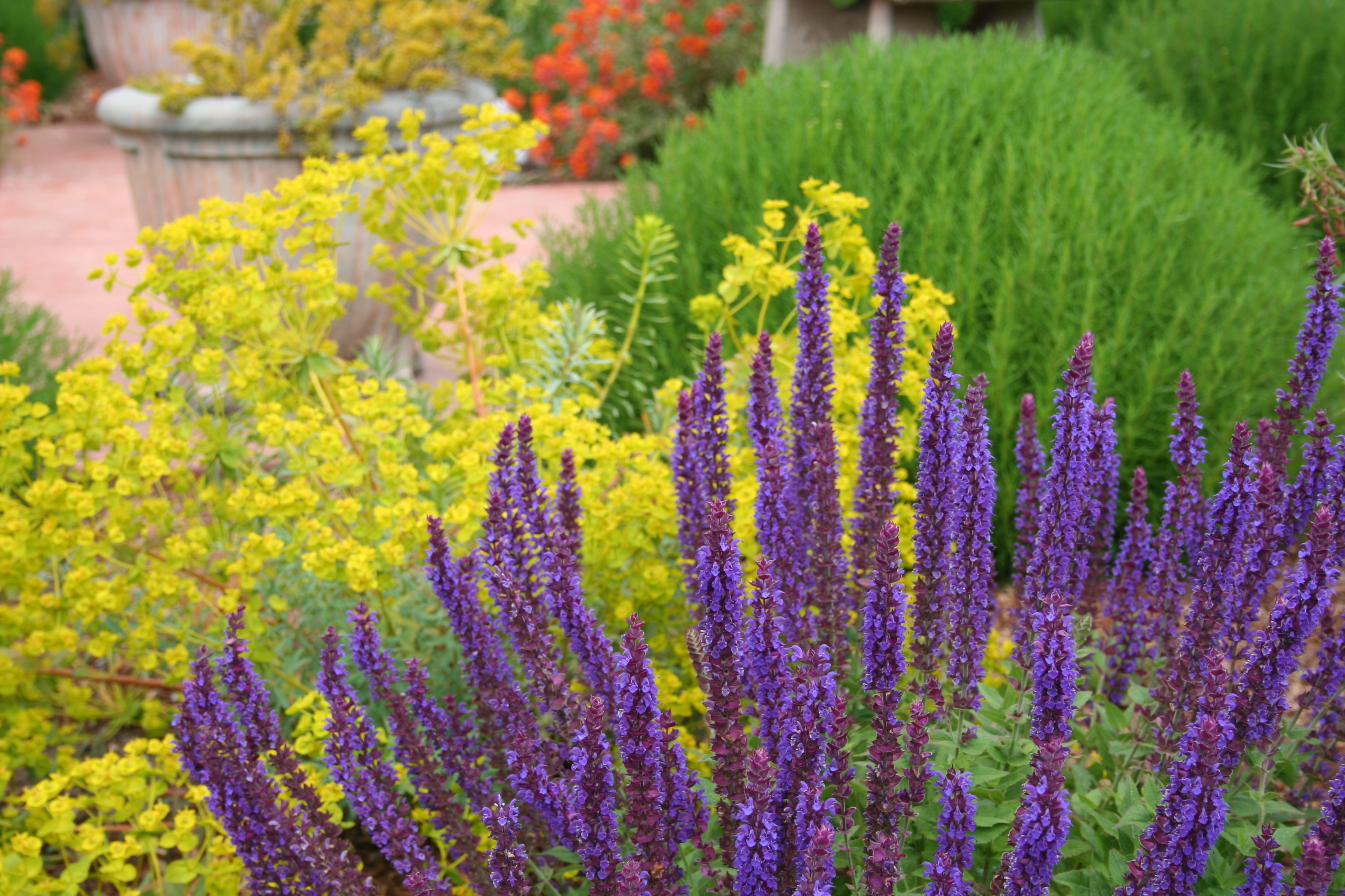 Mediterranean garden design how to create a tuscan garden for Best garden plants