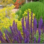 Mediterranean Plants to Rock Your Waterwise Landscape