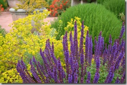 Post image for Mediterranean Plants to Rock Your Waterwise Landscape