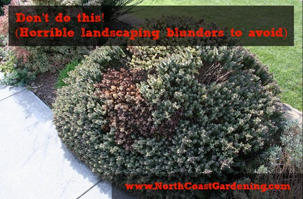 Don't do this! Landscaping blunders to avoid