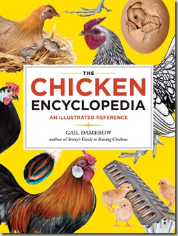 Post image for The Chicken Encyclopedia by Gail Damerow