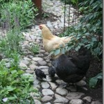 Blog Party for Free-Range Chicken Gardens by Jessi Bloom