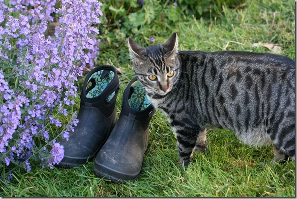 Bogs gardening boots (4)