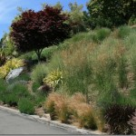 Wildlife Garden Design Tip: Plant in Masses