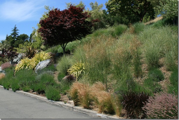 Post image for Wildlife Garden Design Tip: Plant in Masses