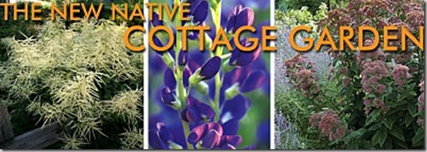 cottage garden new native