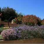 Wildlife Garden Design Tip: Using Native Plants Effectively