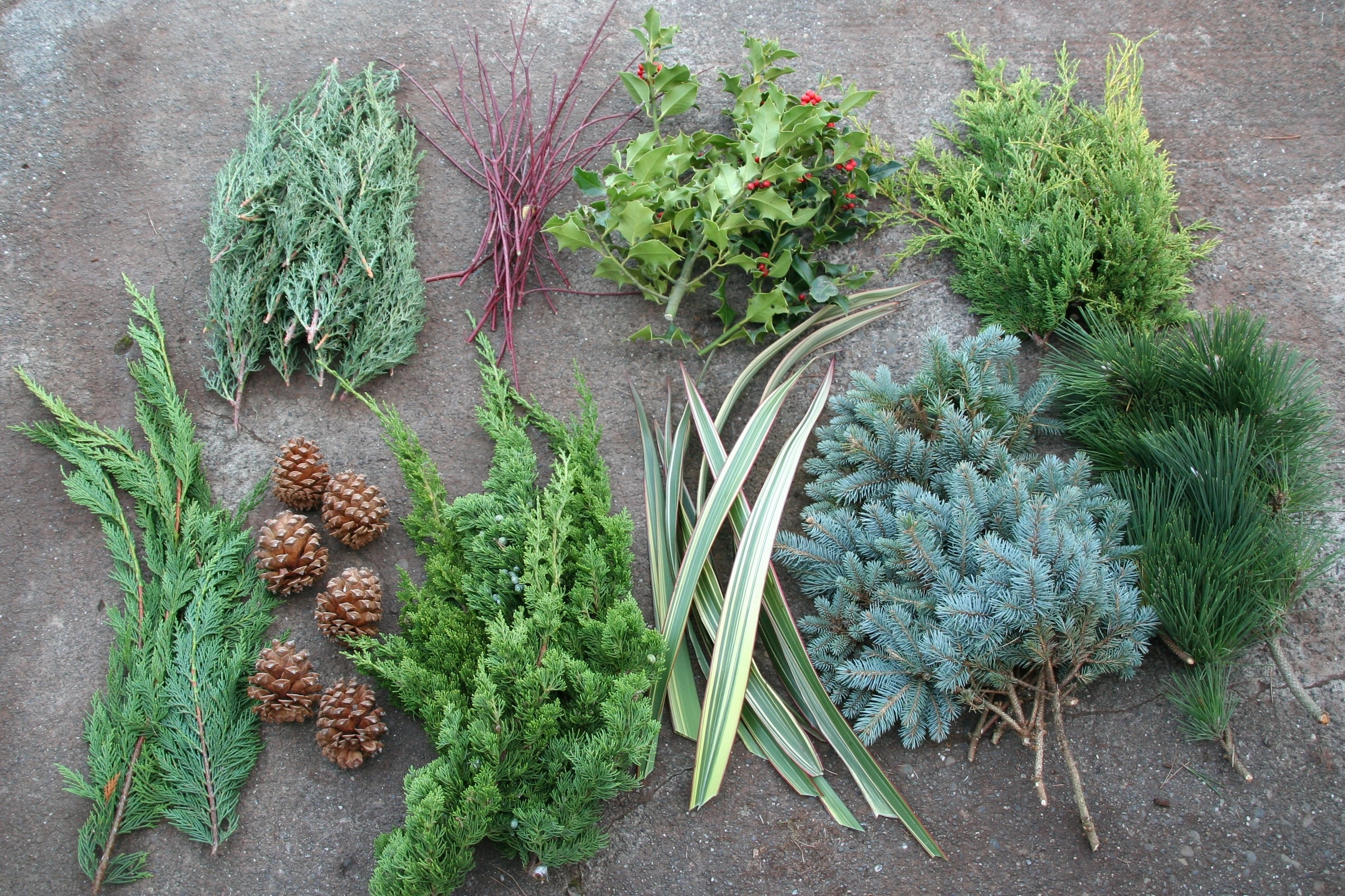 how to make your own christmas wreath north coast gardening