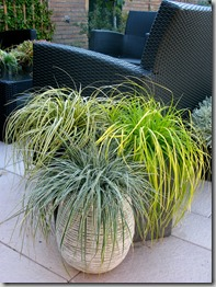 New-grasses-photo-courtesy-Hoffman-Nursery.jpg