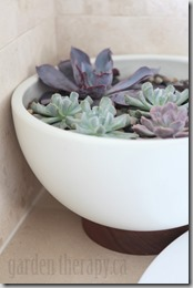 Echeveria-in-Modernica-Case-Study-Bowl-with-Plinth-682x1024